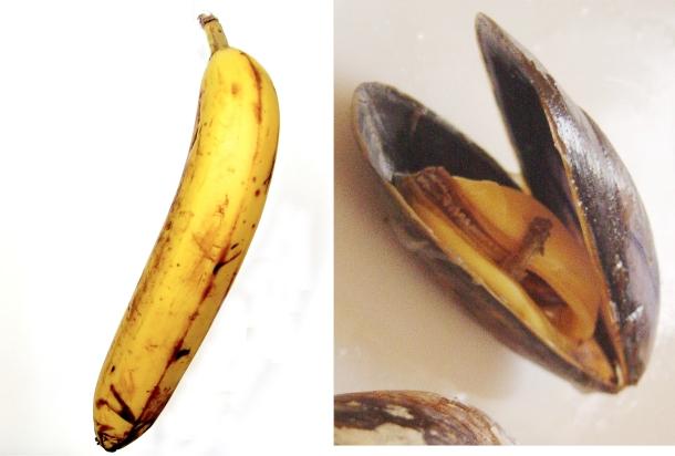 bananamussel